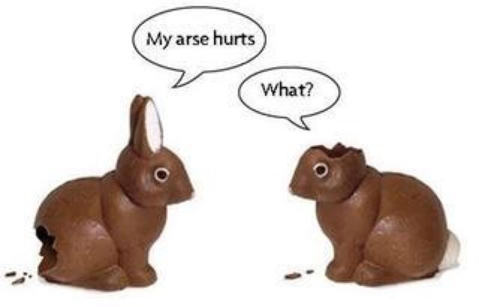 Bunny Humor