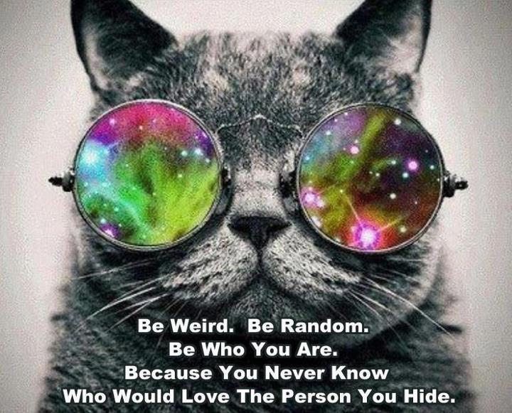 Wise Words Kitty Kat!