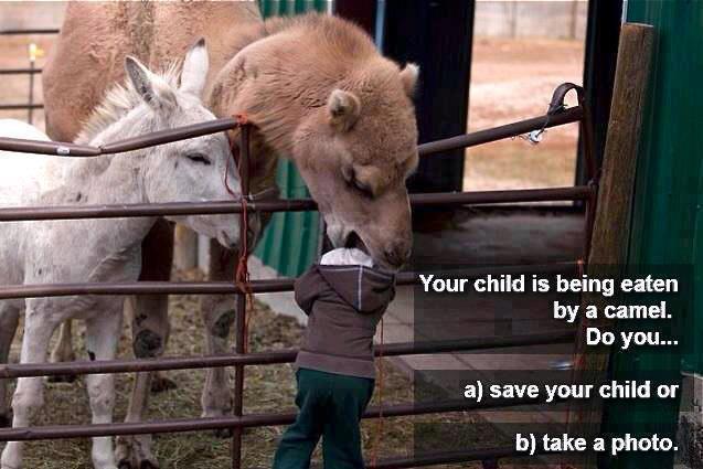 Camel Eats Child's Head!